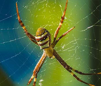 derek-abel-spiders-in-the-garden-2_thumbnail